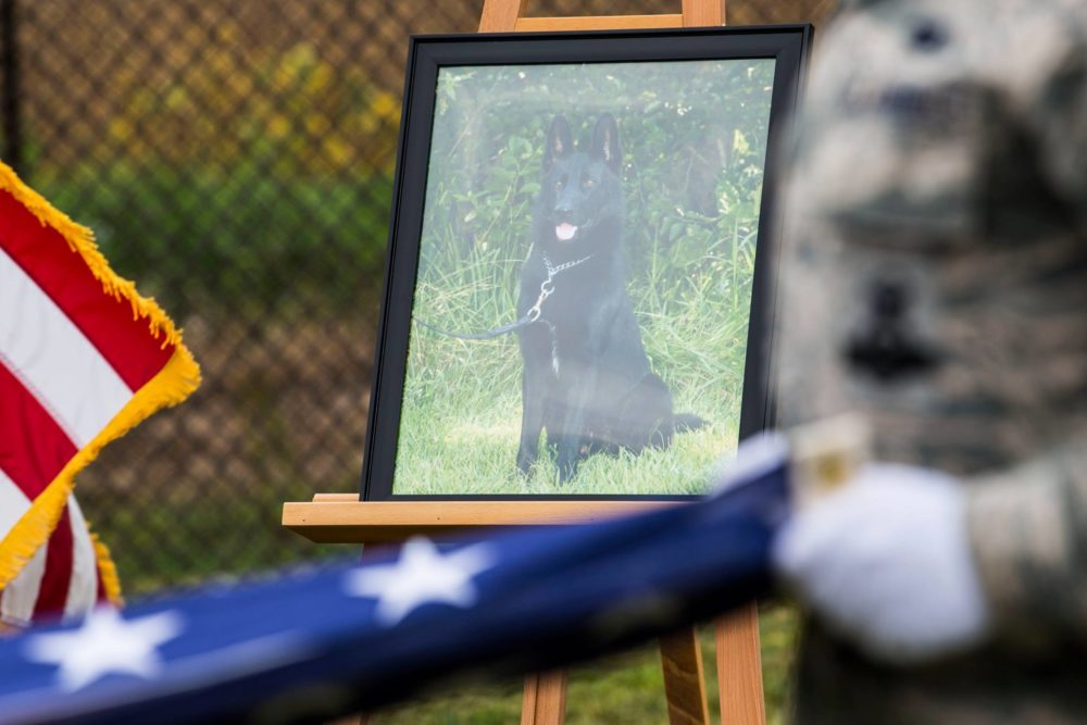 We're Not Crying…You're Crying! We Don't Deserve Military Working Dogs