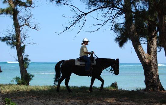 Healing Adventure: Horseback ride